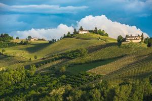 Vineyards of Langhe, Piedmont, UNESCO World Heritage by javarman