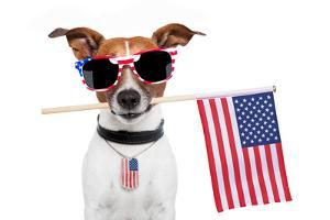 American Dog by Javier Brosch