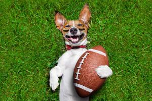 American Football Dog by Javier Brosch