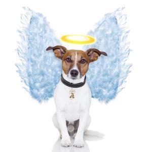 Angel Dog Feather Wings Aura Nimbus by Javier Brosch