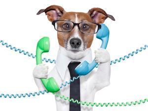 Business Dog by Javier Brosch