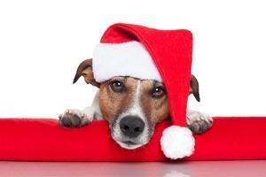 Christmas Dog Santa Baby by Javier Brosch