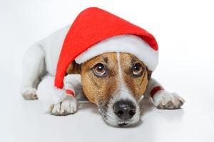 Christmas Dog Santa by Javier Brosch