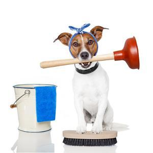 Cleaning Dog by Javier Brosch