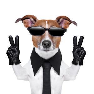 Cool Dog by Javier Brosch