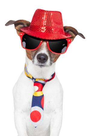 Crazy Silly Funny Dog Hat Glasses Tie by Javier Brosch