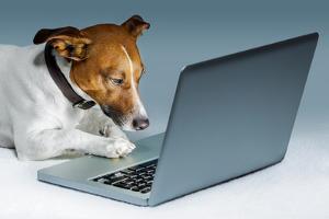Dog Computer by Javier Brosch