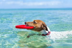 Dog Frisbee by Javier Brosch