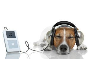 Dog Listen to Music with a Music Player by Javier Brosch