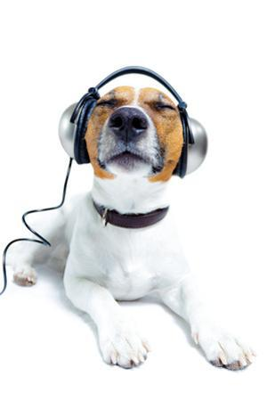Dog Listening to Music by Javier Brosch