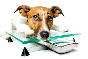 Dog on Scale by Javier Brosch