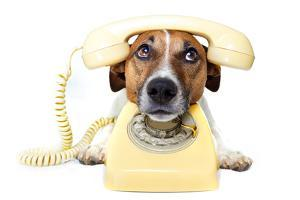 Dog on the Phone by Javier Brosch