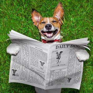 Dog Reading Newspaper by Javier Brosch