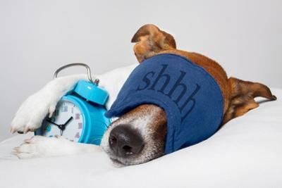 Dog Sleeping with Alarm Clock and Sleeping Mask by Javier Brosch