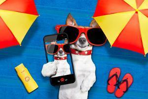 Dog Summer Beach Selfie by Javier Brosch