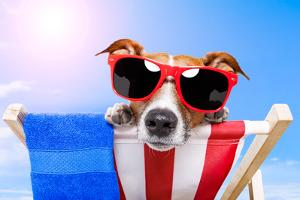 Dog Sunbathing With A Towel And Sunglasses by Javier Brosch