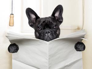 Dog Toilet by Javier Brosch