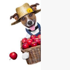 Farmer Dog by Javier Brosch