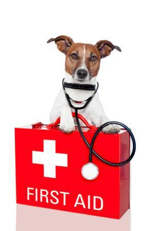 First Aid Dog by Javier Brosch