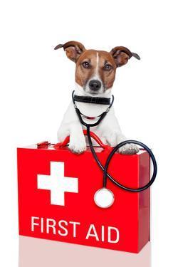 First Aid Dog by Javier Brosch