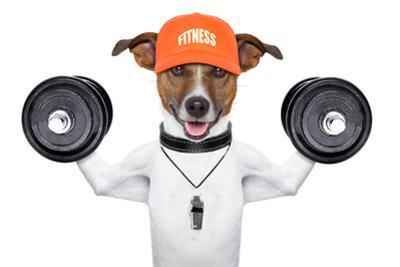Fitness Dog by Javier Brosch