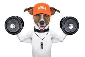 Fitness Dog by Javier Brosch