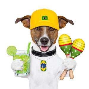 Funny Dog Brazil by Javier Brosch