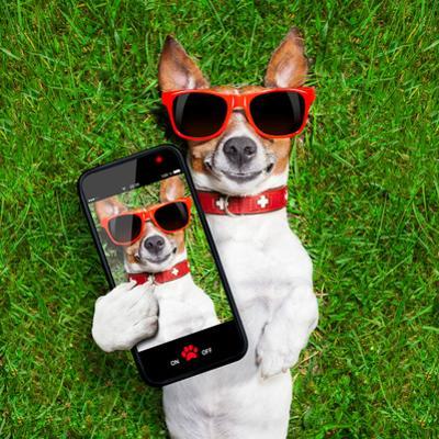 Funny Selfie Dog by Javier Brosch