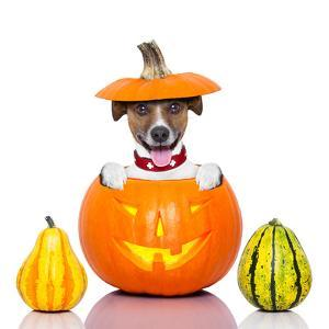 Halloween Dog by Javier Brosch