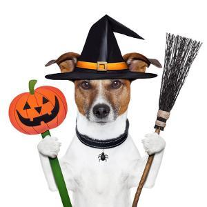 Halloween Pumpkin Witch Dog by Javier Brosch