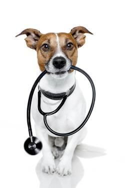 Medical Doctor Dog by Javier Brosch