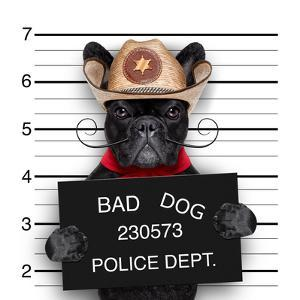 Mexican Mugshot Dog by Javier Brosch
