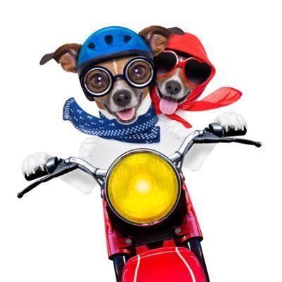 Motorbike Couple of Dogs by Javier Brosch