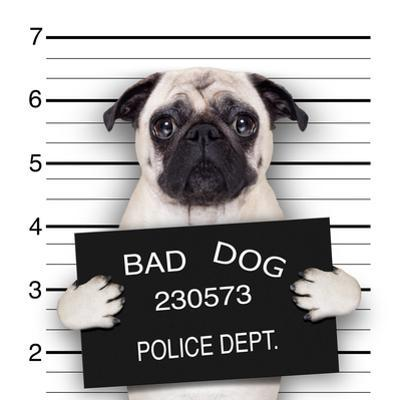 Mugshot Dog by Javier Brosch
