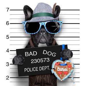 Mugshot Dog by Javier Brosch
