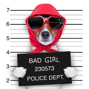 Mugshot Lady Dog by Javier Brosch