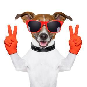 Peace And Victory Fingers Dog by Javier Brosch