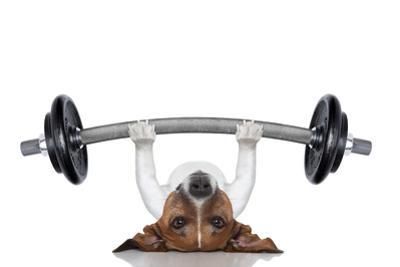 Personal Trainer Dog by Javier Brosch