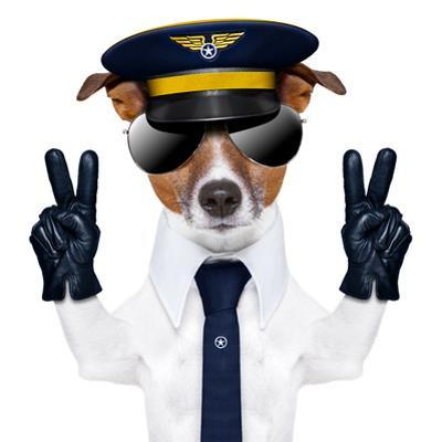 Pilot Dog by Javier Brosch
