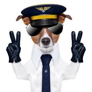 Pilot Dog by Javier Brosch