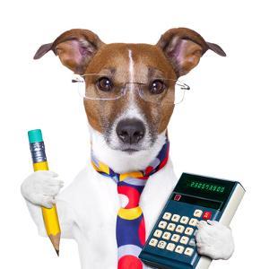 Secretary Dog by Javier Brosch