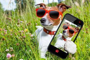 Selfie Dog in Meadow by Javier Brosch