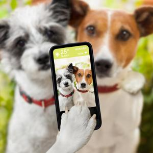 Selfie Dogs by Javier Brosch