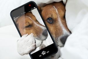 Sleepyhead Selfie Dog by Javier Brosch