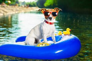 Summer Beach Dog by Javier Brosch