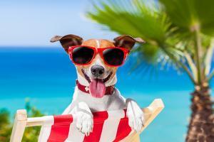 Summer Vacation Dog by Javier Brosch