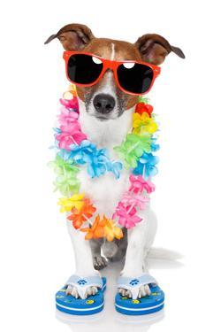 Tourist Dog With Hawaiian Lei And Shades by Javier Brosch
