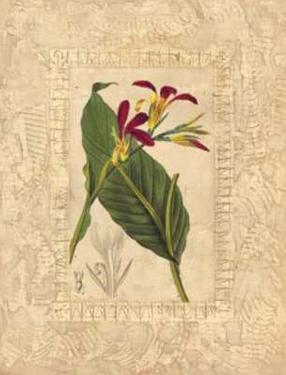 Estudio de Flores I by Javier Fuentes