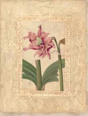 Estudio de Flores II by Javier Fuentes