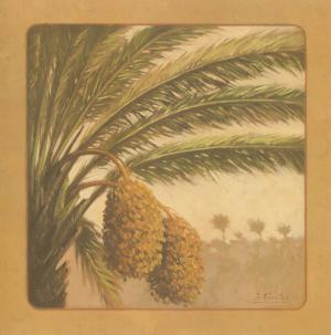 Palmtree by Javier Fuentes